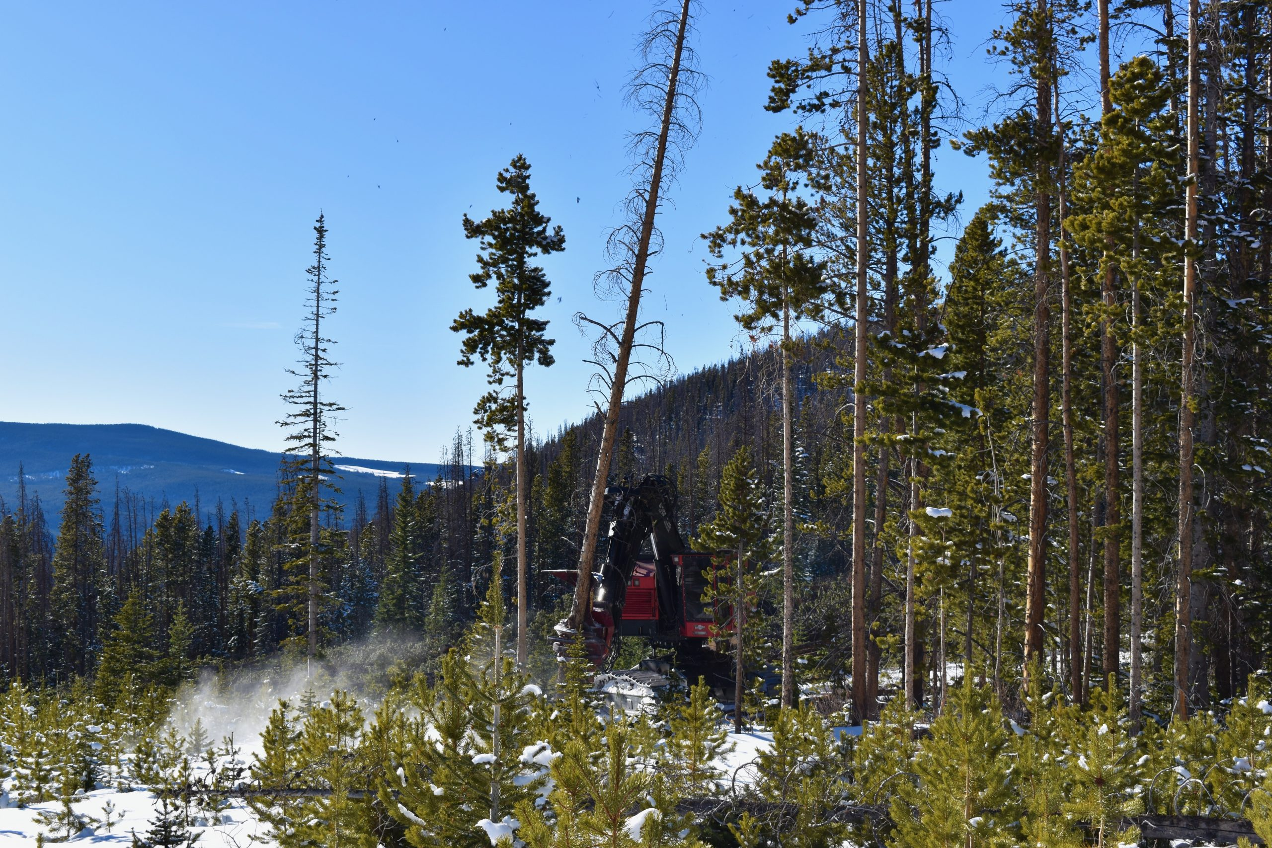 After catastrophic wildfires, can logging help save Colorado's forests?